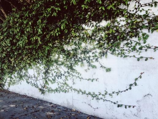 Wall Intruder